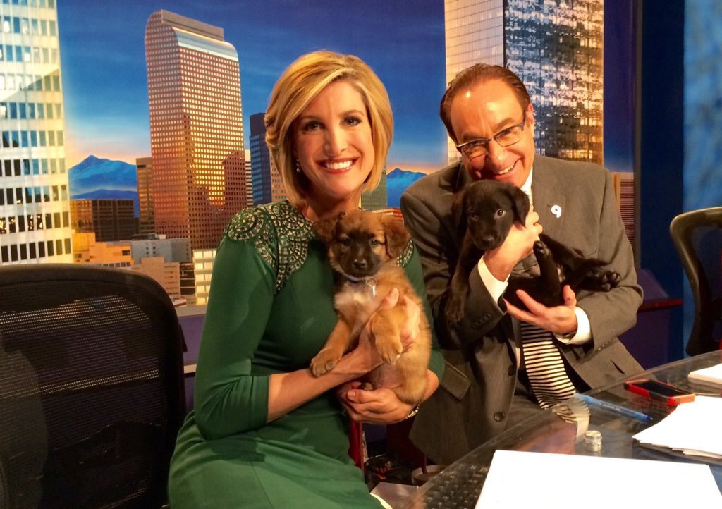 Puppies everywhere! It's @DDFL telethon. Raising $ for shelter animals. 9newsmornings