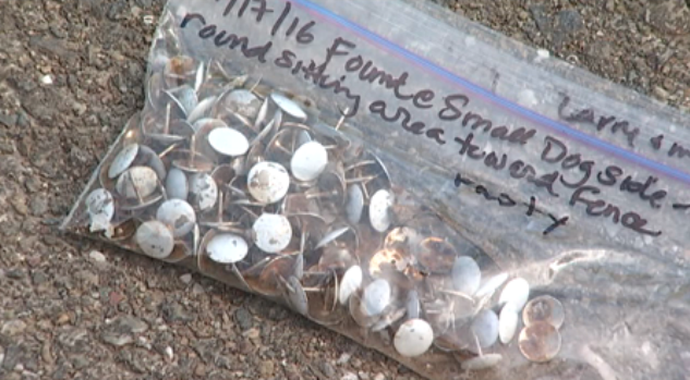 @Hercules_PD looking for whoever is leaving hundreds of tacks at Ohlone Dog Park