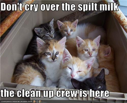 """Don T Cry Over Spilt Milk Quotes: Kitty Bungalow On Twitter: """"Happy National """"Don't Cry Over"""