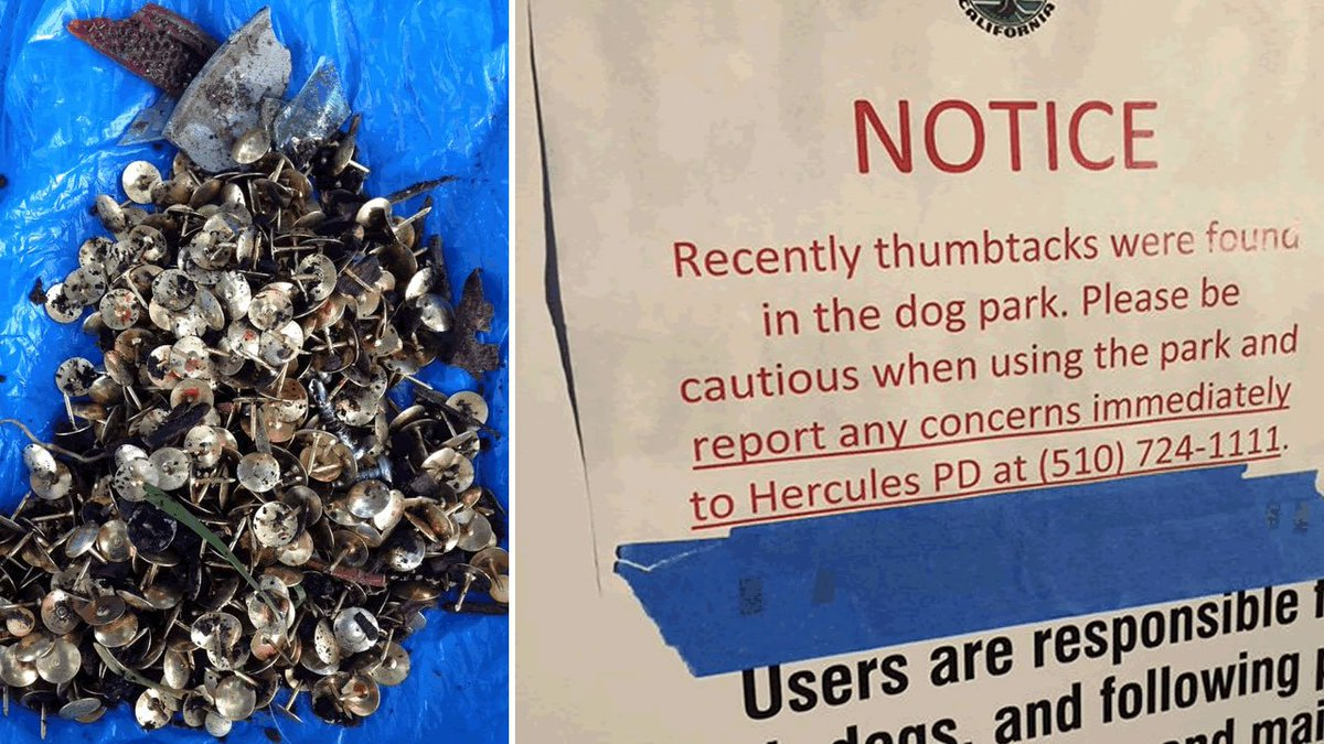 2 pets hurt after hundreds of tacks intentionally spread around dog park, police say