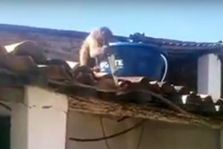 Macaco embriagado ameaça frequentadores de bar na Paraíba com uma peixeira.  https://t.co/e65TyTEqI3