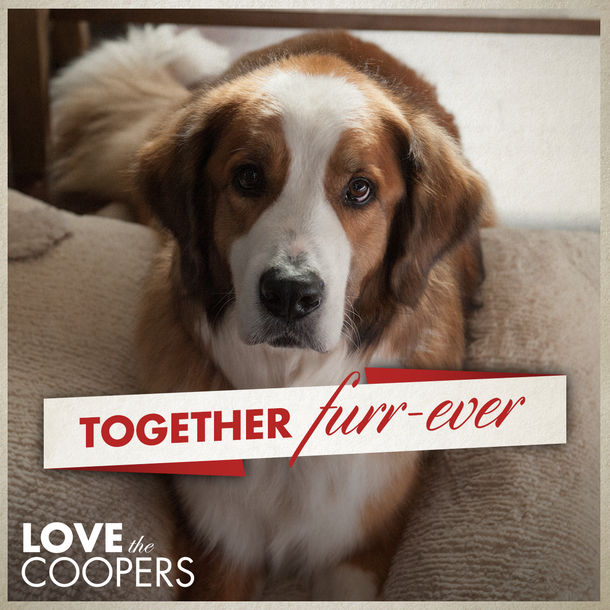 Rags knows that family always has each other's back. #LoveTheCoopers https://t.co/uU3GjKgW2J