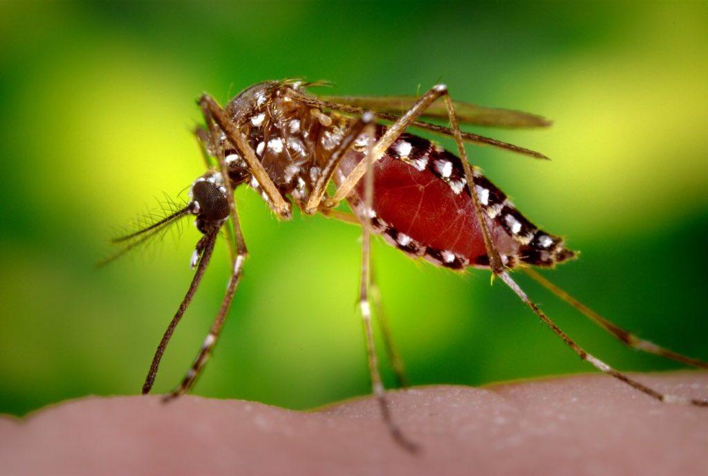 Primo test medico agenti patogeni virus Zika
