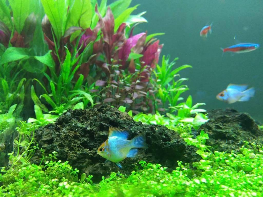 Akvaristan Akvaryum On Twitter Akvaristan Aquarium