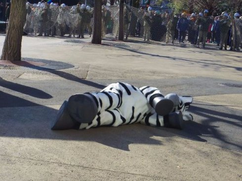着ぐるみがかわいい  脱走したシマウマを応援したくなる あくまでも真面目な上野動物園「猛獣脱出対策訓練」に密着した - ねとらぼ