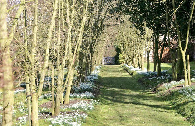 Discover one of the finest snowdrop displays in the UK @Rode_Hall for @VisitEngland's enchanting #SnowdropFestival https://t.co/vG6PTyjNzV
