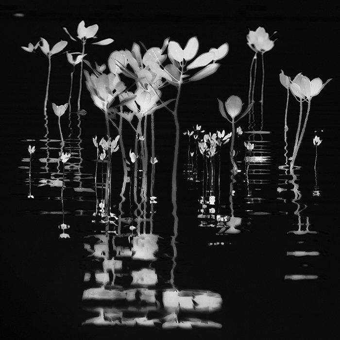 Mangrove Symphony - @hengki24 - https://t.co/Xqq2pF5sZh