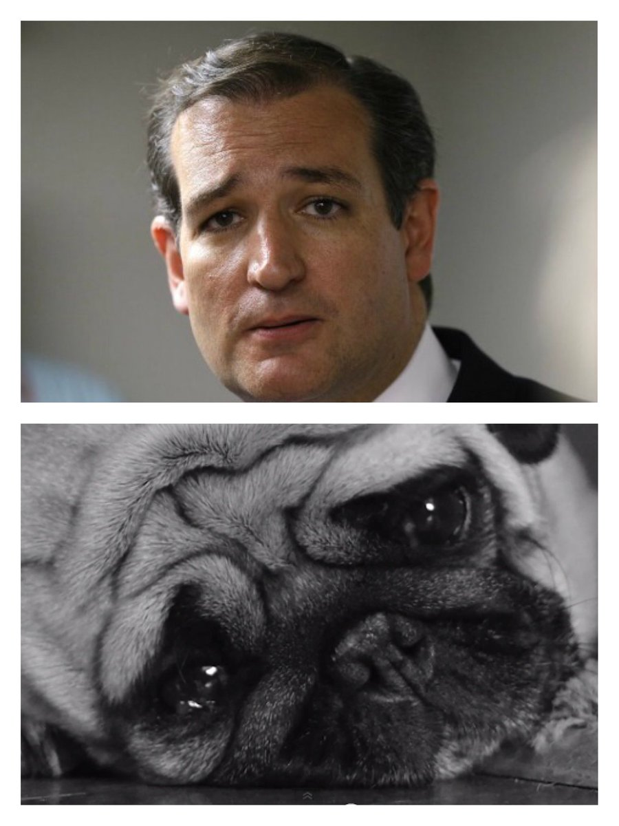 bucky isotope on twitter ted cruz looks like he should be starring