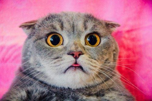 "Cute Cats on Twitter: ""Follow my tumblr: https://t.co/MujTUnYizt #cat #cute #cats #kitten #adorable https://t.co/50Ntf9G4Rz"""