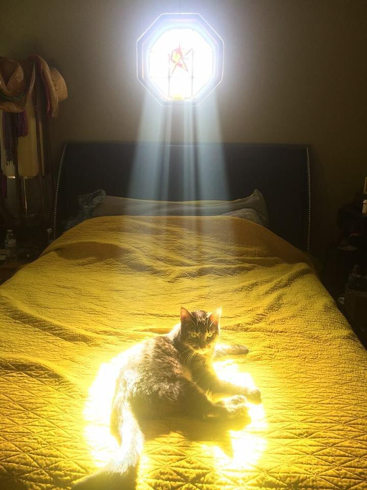 友人のネコが窓から入る光を全身に浴びて、『選ばれしもの』みたいになっていたそう。 ほんま、これ。