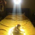 ほんとに画像加工無し!?猫ちゃんが神々しすぎて運気が上がりそうな件!