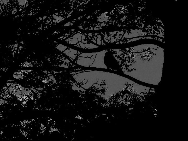 deep regrets  in the absence of light the crows silhouette #mpy https://t.co/2Z57SGDJQi