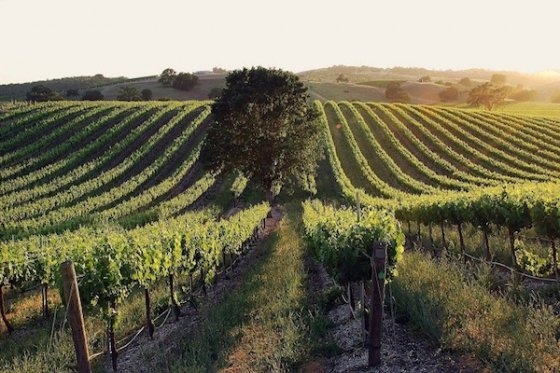 Discover why Paso Robles is a taster's paradise. #pasowine #VisitSLOCounty #travelpaso https://t.co/ZvZ9JHX3Ix https://t.co/70bZHiMekZ