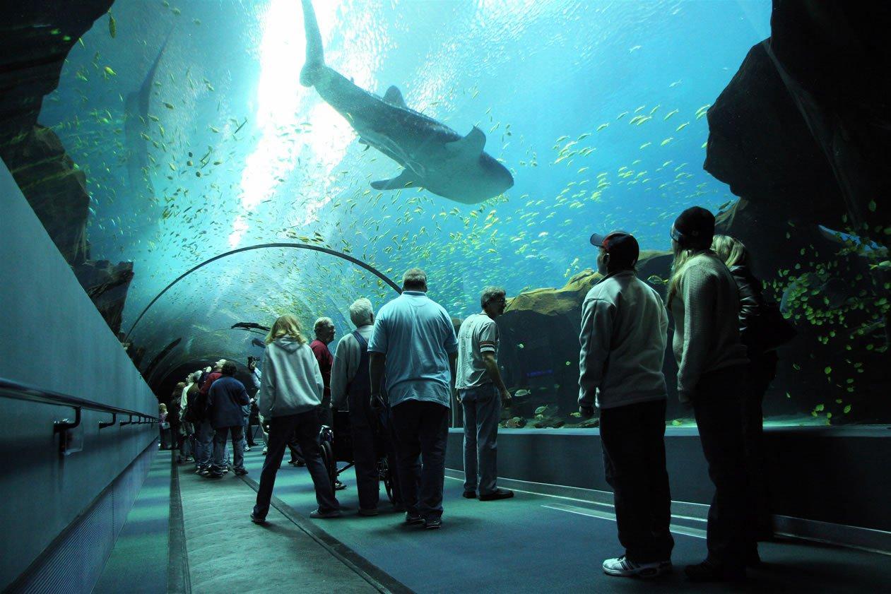 приколы няшки самый большой в мире аквариум фото лет