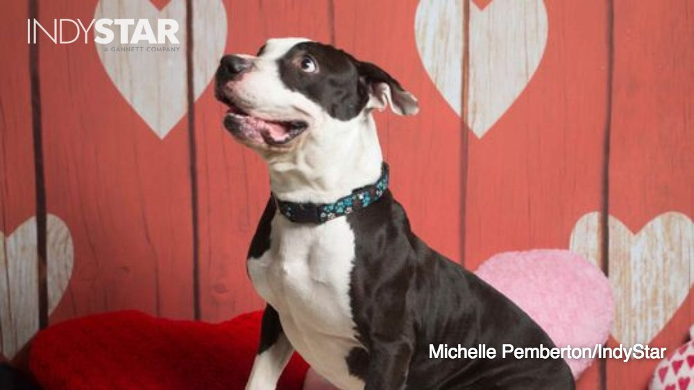 Your late-night awww: Adoptable animals who want your love this Valentine's Day.