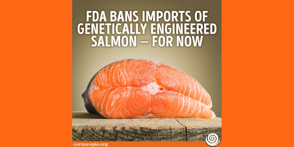 genetically modified salmon essay Genetically modified (gm) foods could produce new toxic substances, and/or allergens a gene from the brazil nut was inserted into the dna of a soybean plant to increase the nutritional value of the soybean however, this particular gene in the gm soybean also produced an allergen (a substance.