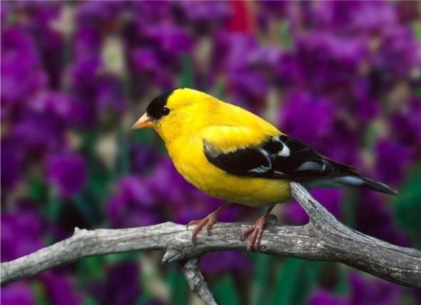 Невероятный окрас птиц https://t.co/Oo8uwFQ4zi #удивительно #птицы #красота #цвет #планета #colors #life #позитив https://t.co/7egMShj03X