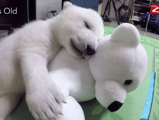 Meet Nora, the Columbus Zoo's cuddly polar bear cub