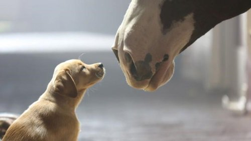 12 of the best SuperBowl commercials of all time