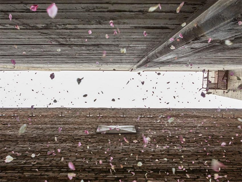 Stand under a shower of flower petals todayy thanks to the artists behind @petaldropla