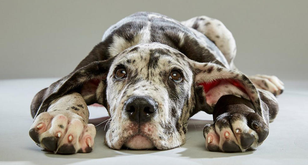 Not a fan of the SuperBowl? Catch the PuppyBowl instead! Meet the line up