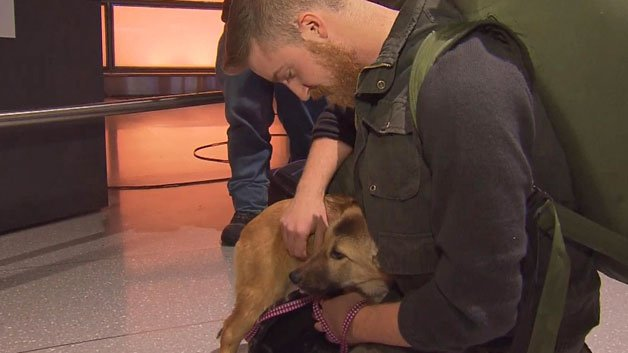 Former Marine Reunites With Dog He Cared For In Iraq (via @JulieLoncich)