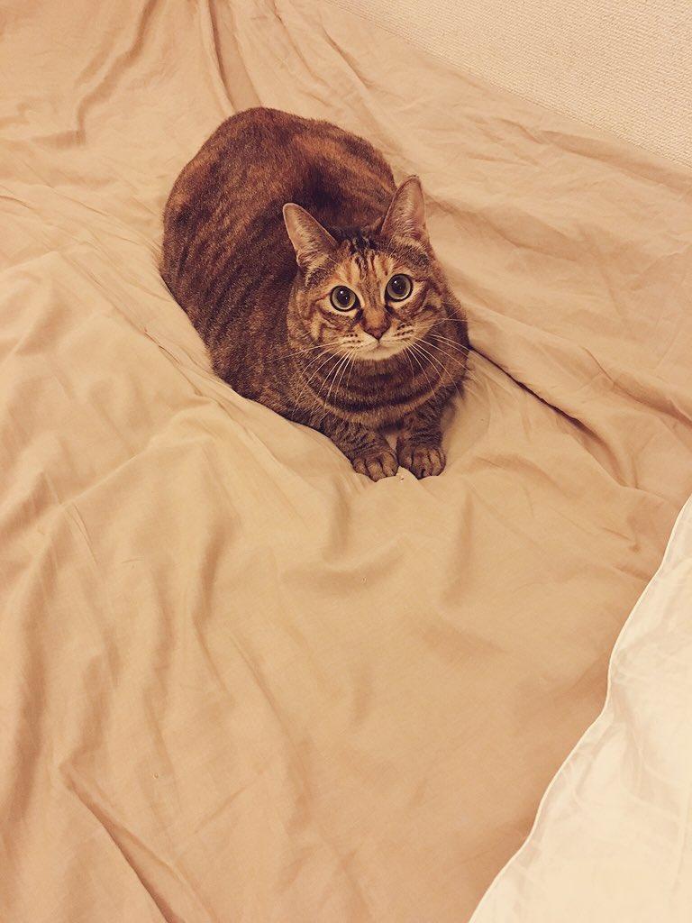 部屋が荒れていて、床にはCDや本、服や帽子、ペットボトルや楽器、リモコンなどが落ちている状態です。部屋の乱れは心の乱れなので、まずは心のため、次に部屋のため、そして猫のために、僕は片付けをします。