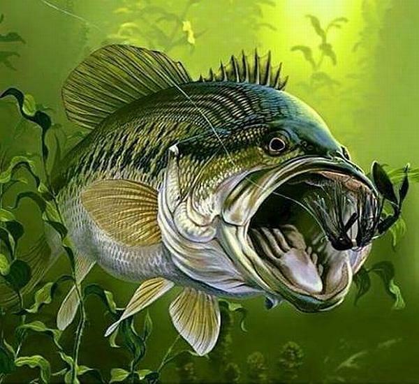 Отчёт о рыбалке на можайке