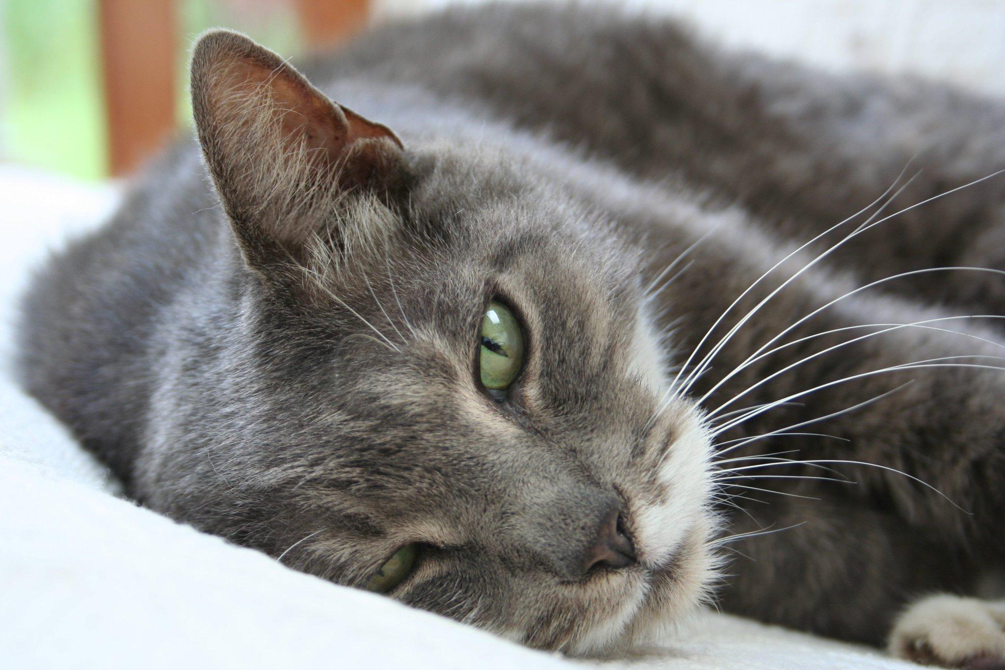 Кошачьи в картинках, картинки котов