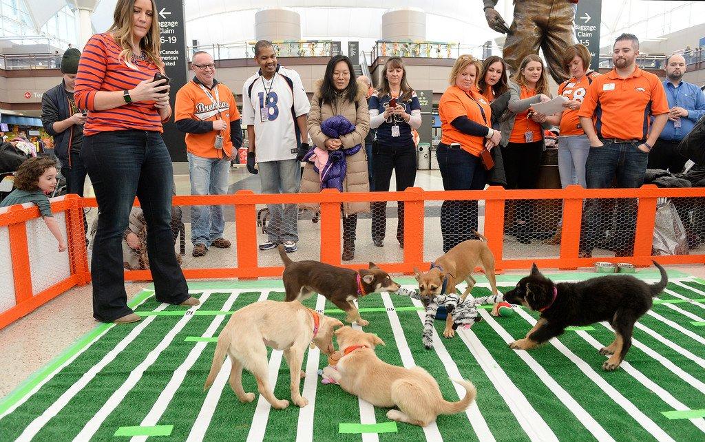 Cute puppy alert: @DENAirport hosted a Denver PuppyBowl on Friday