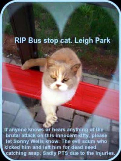 Big-hearted Brits raise more than $6,500 for beloved BusStopCat