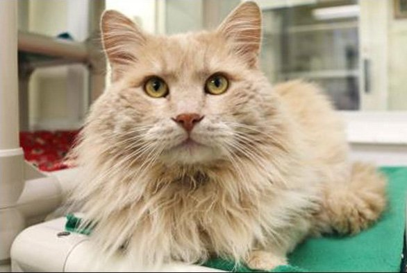 Check out these 10 adoptable, adorable cats from the Seattle Humane Society -