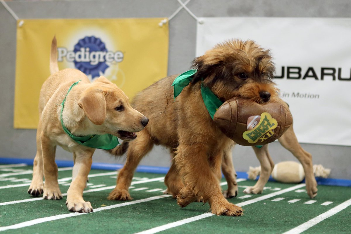 Are you ready for cute overload? Puppy Bowl airs Sunday. Watch the video of 1 dog's journey.