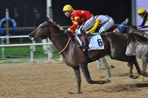 Serhantay – Çukurova Koşusu 2016