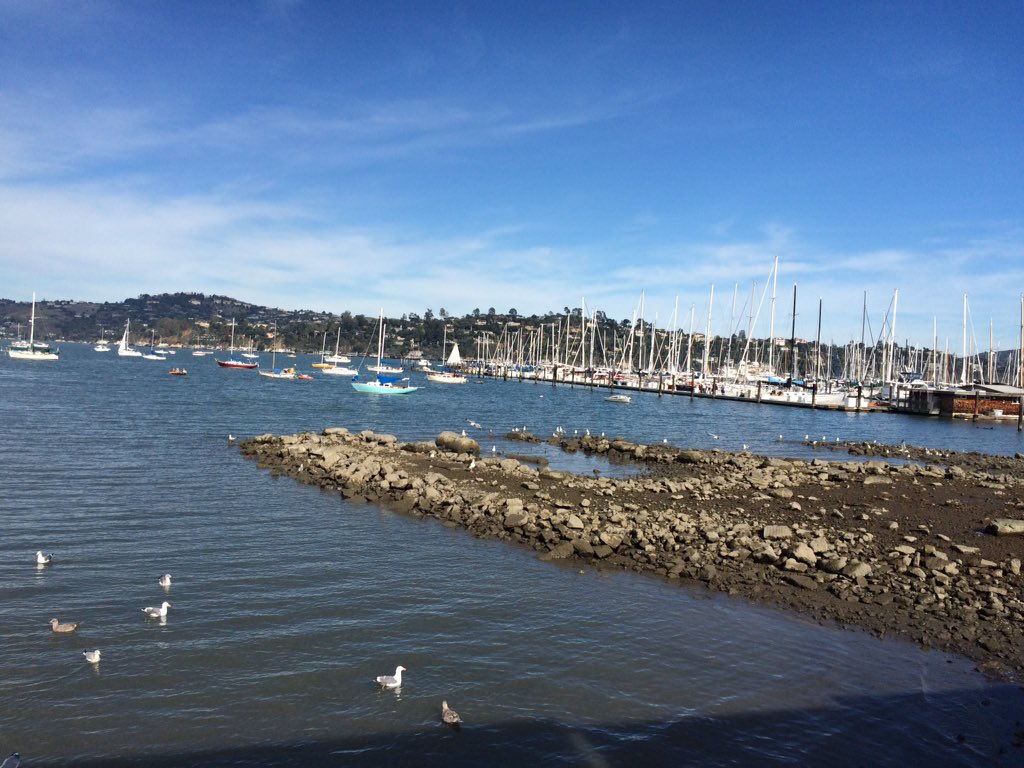 Chamber of commerce day in sausalito ️