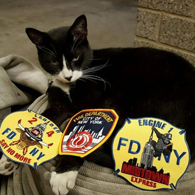 Boogie, the @FDNY cat, has died