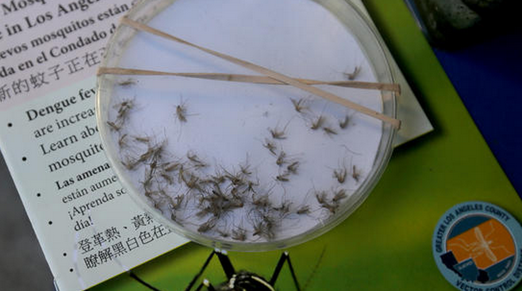 GOPdebate questions now turn toward Zika. Here's everything you need to know about Zika