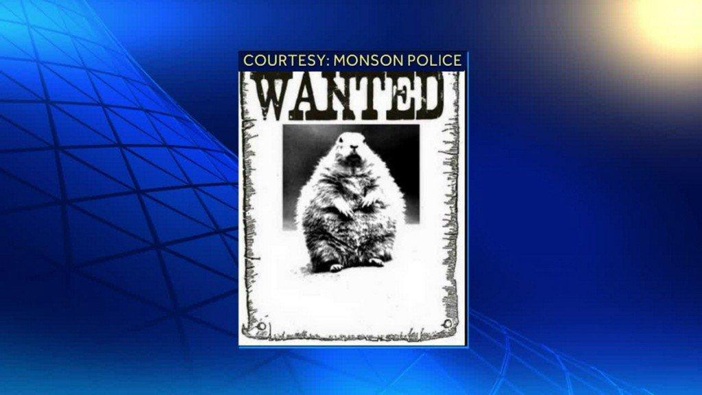 Police issue arrest warrant for groundhog