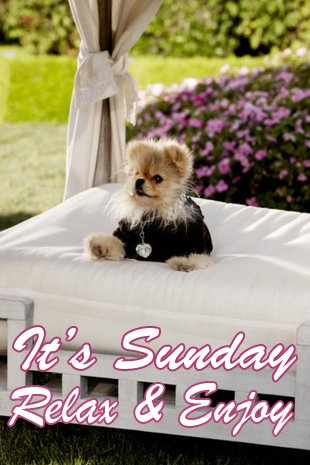 Vanderpump Pets On Twitter Its Sunday Relax Enjoy
