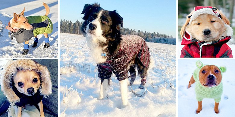 Adorable Dogs Dressed Up In Snow Clothes Are Definitely The Cutest Thing About #Winter2016 https://t.co/mOiFFcnwbu https://t.co/le6FrgC3P5