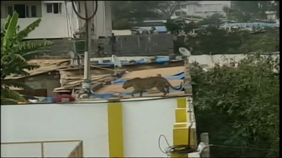 WATCH: Leopard wanders into south India school -