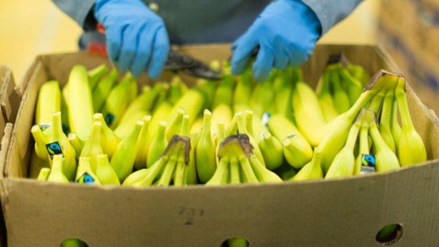 Melanoma, con le banane un nuovo tipo di diagnosi