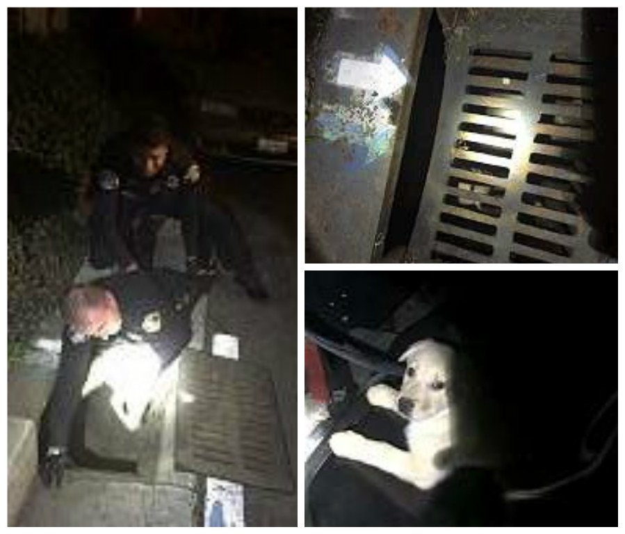 @SanJosePD rescues puppy from storm drain after officer hear dog crying.