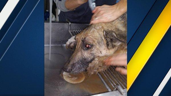 German Shepherd rescued from sinkhole