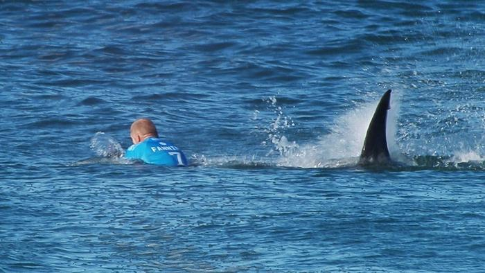 2015 sets record for most shark attacks worldwide