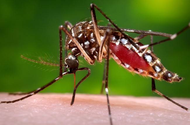 Hawaii Island declares state of emergency over dengue fever outbreak
