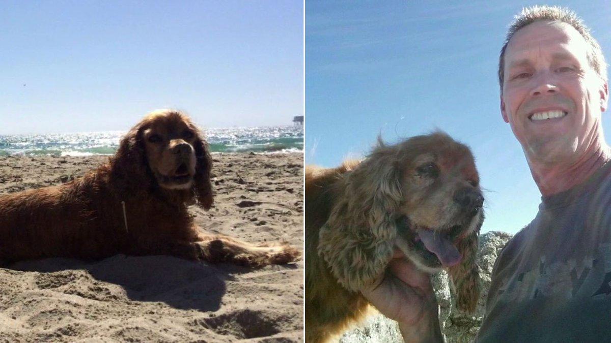 Elderly pet stolen from Claremont dog park found safe, returned to owner