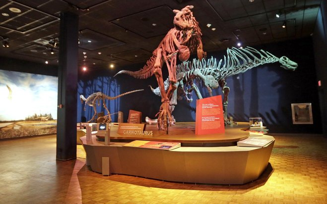 Dinosaurs left no trace in Wisconsin, but a new museum exhibit is bringing them back