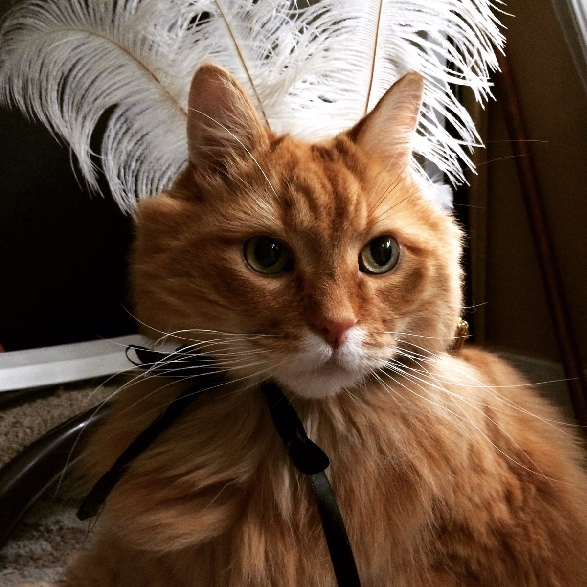 https://pbs.twimg.com/media/CaxgyHjUAAAab7K.jpg