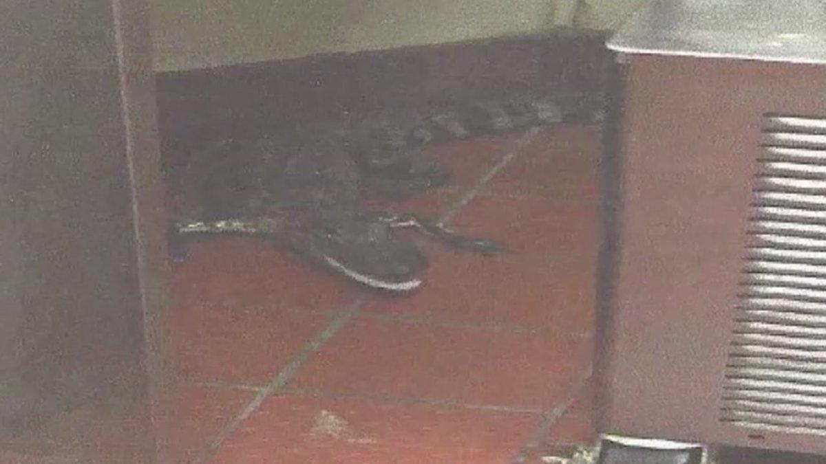 Florida man accused of throwing alligator through Wendy's drive-thru window